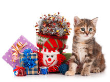 Cute kitten Stock Photography