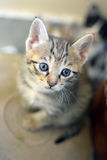 Cute Kitten! stock image