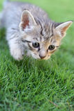 Cute Kitten! royalty free stock photography