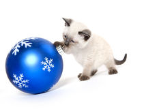Cute kitten and ornament Stock Photo