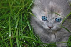 Cute kitten outdoor Royalty Free Stock Photo