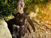 Cute kitten outdoors Stock Photos