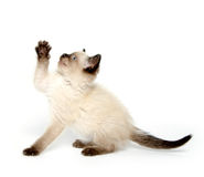 Cute kitten with paw up Stock Photos