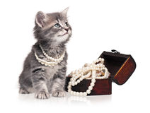 Kitten with pearl. Cute kitten with pearl necklaces isolated on white background stock photos