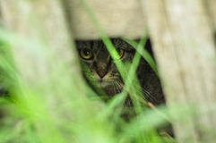 Cute kitten peeking out of the bushes. Hiding in the shadow and grass. Stock Photo