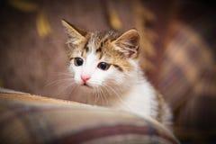Cute kitten. Peeking out of a chair Stock Photos