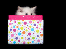 Cute kitten peeking out of gift box Royalty Free Stock Image