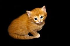 Cute Kitten-1. Photo of a cute little kitty Stock Photos