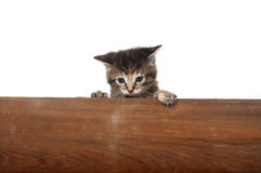Cute kitten piiking over wooden board Stock Images