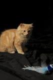 cute kitten playing 免版税库存图片