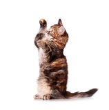 Cute kitten playing Stock Photos