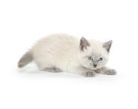 Cute kitten playing Stock Photo