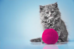 Cute kitten playing with ball of wool studio isolated Royalty Free Stock Photos