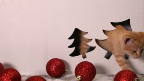 Cute kitten playing in christmas decorations setting stock video