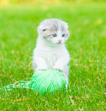 Cute kitten playing with clew of thread on green grass Royalty Free Stock Photos