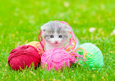Cute kitten playing with clews of thread on green grass Stock Images