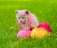 Cute kitten playing with clews of thread on green grass Royalty Free Stock Photo