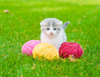 Cute kitten playing with clews of thread on green grass Stock Photography