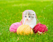 Cute kitten playing with clews of thread on green grass Royalty Free Stock Images