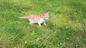 Cute kitten playing in the garden stock video
