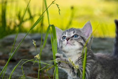 Cute kitten playing in the grass Stock Image