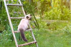 Cute kitten playing on green grass, summer fun.  stock photography