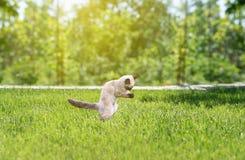 Cute kitten playing on green grass, summer fun.  royalty free stock photos