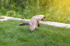 Cute kitten playing with paper on green grass.  royalty free stock photography