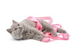 Cute kitten playing with pink ribbon isolated Stock Images