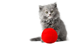 Cute kitten playing with red ball of wool studio isolated Royalty Free Stock Photo
