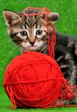 Cute kitten. Playing red clew of thread on artificial green grass royalty free stock image