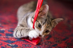Cute Kitten playing with a red lint. A cute kitten playing with a red lint on a red carpet Stock Photos