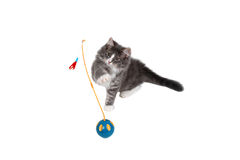 Cute kitten playing with toy Royalty Free Stock Photo