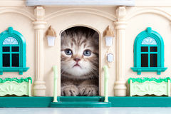 Cute kitten playing in toy house Stock Photos
