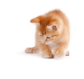 Cute kitten playing on white. Stock Photos