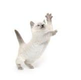 Cute kitten playing on white Stock Image