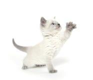 Cute kitten playing on white Royalty Free Stock Photos
