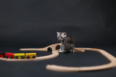 Cute kitten playing with a wooden train Stock Photos
