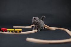 Cute kitten playing with a wooden train Royalty Free Stock Photography