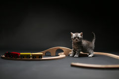 Cute kitten playing with a wooden train Royalty Free Stock Photos