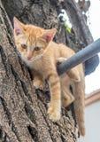 Cute kitten plays acrobat on tree. Little cute golden brown kitten plays acrobat with metal bar on backyard outdoor tree, selective focus on its eye Stock Image