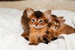 Cute kitten portrait Stock Photo
