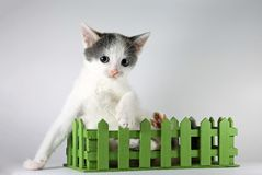Cute kitten posing in green wooden box, close-up Royalty Free Stock Images