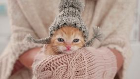 Cute kitten prepared for winter, wearing knitted woolen hat