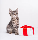 Cute kitten with present box Royalty Free Stock Photos