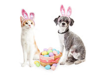 Cute Kitten and Puppy With Easter Basket Stock Image