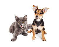 Cute kitten and puppy laying together Royalty Free Stock Images
