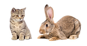 Cute kitten and rabbit Stock Photography