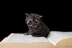 Cute kitten reading a book Royalty Free Stock Photography