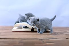 Cute kitten reading Royalty Free Stock Photography